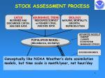 stock assessment process