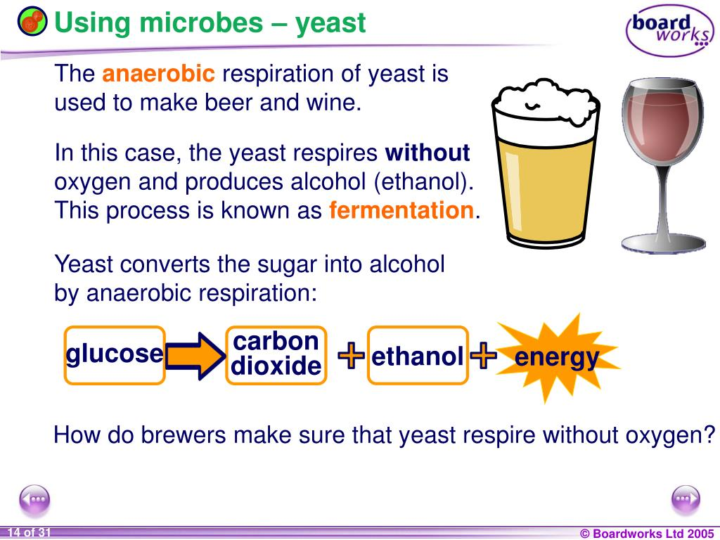 Using microbes – yeast