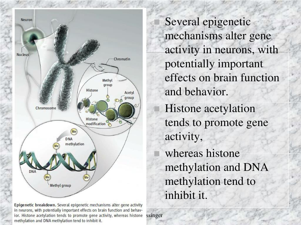 Several epigenetic mechanisms alter gene activity in neurons, with potentially important effects on brain function and behavior.