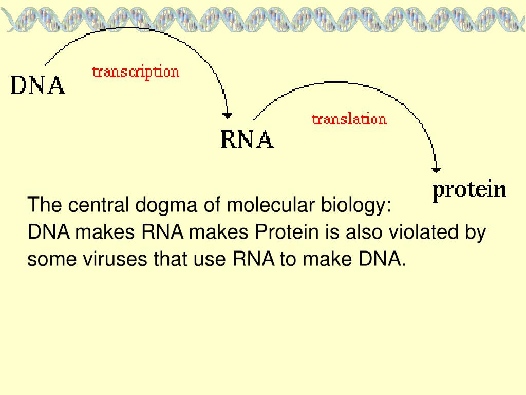 The central dogma of molecular biology: