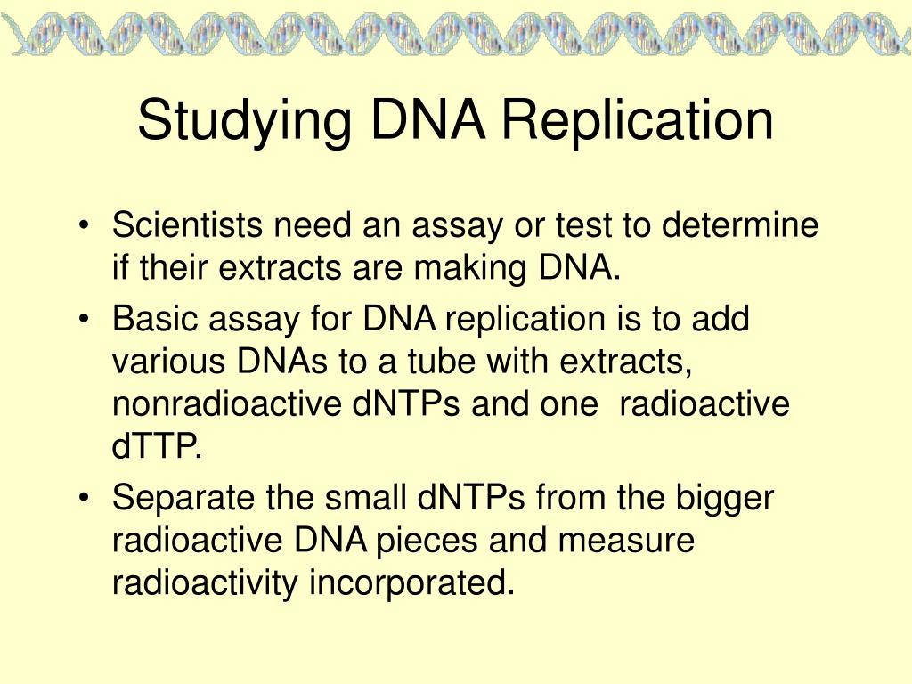 Studying DNA Replication