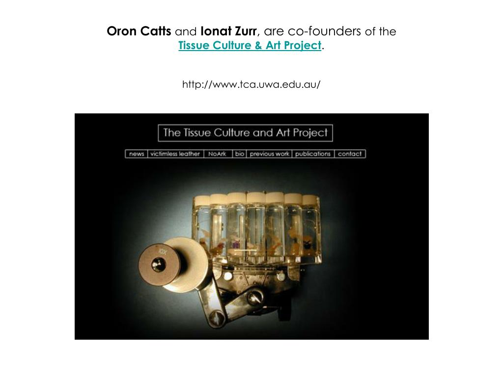 Oron Catts