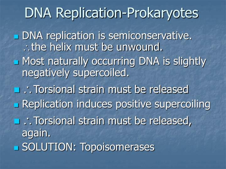 DNA Replication-Prokaryotes