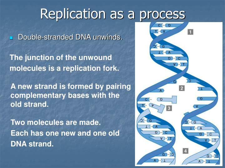 Replication as a process