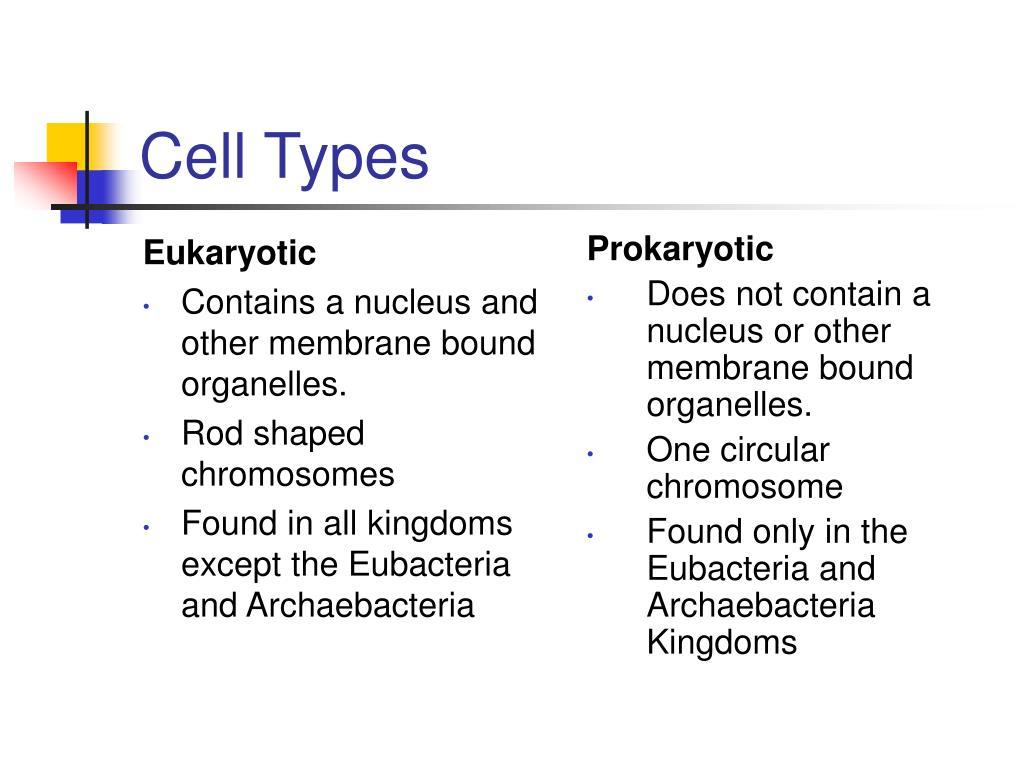 Eukaryotic