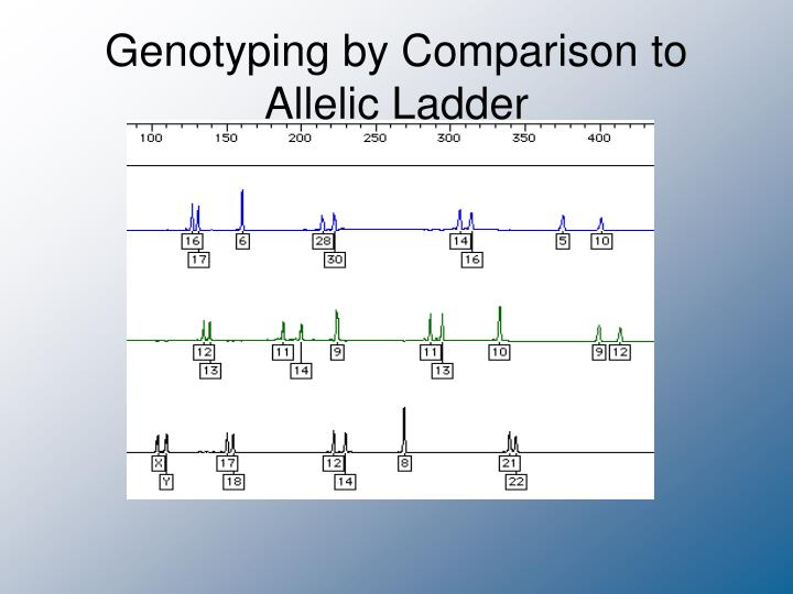 Genotyping by Comparison to Allelic Ladder