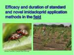 efficacy and duration of standard and novel imidacloprid application methods in the field