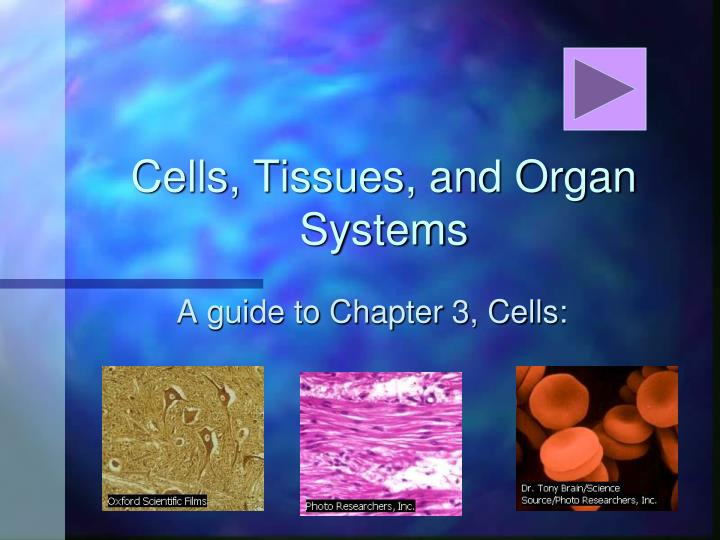 cells tissues and organ systems n.