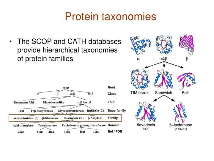 Protein taxonomies