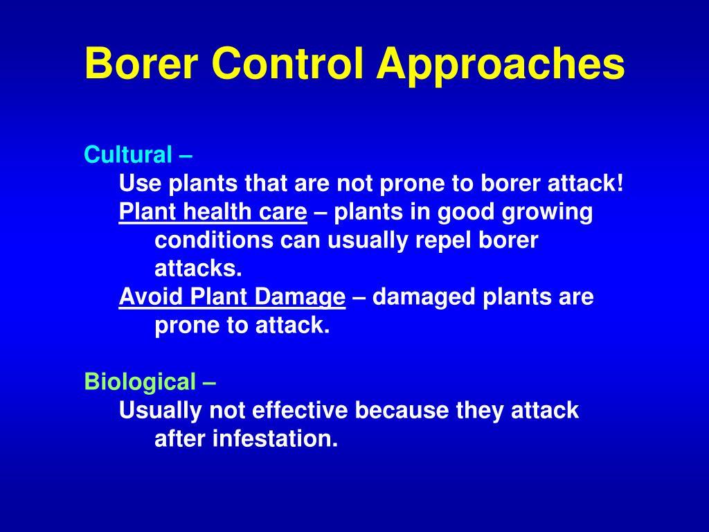 Borer Control Approaches