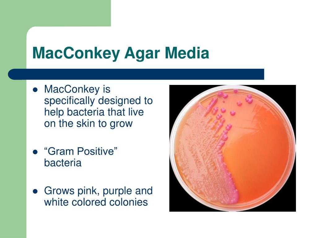 MacConkey Agar Media
