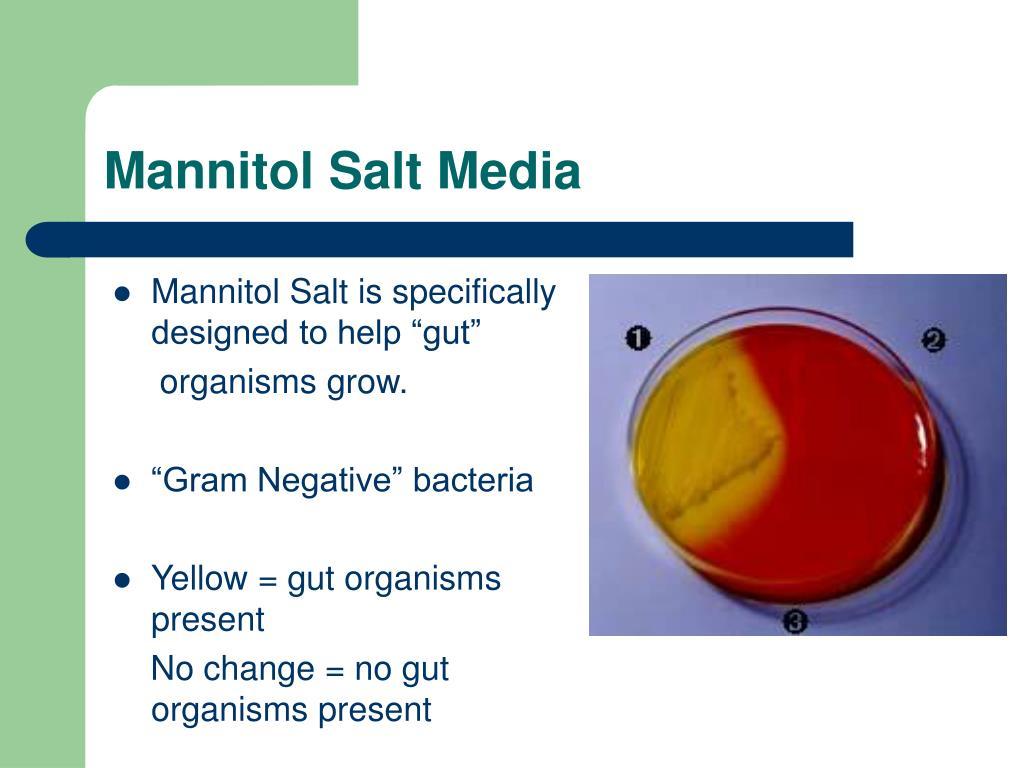 Mannitol Salt Media