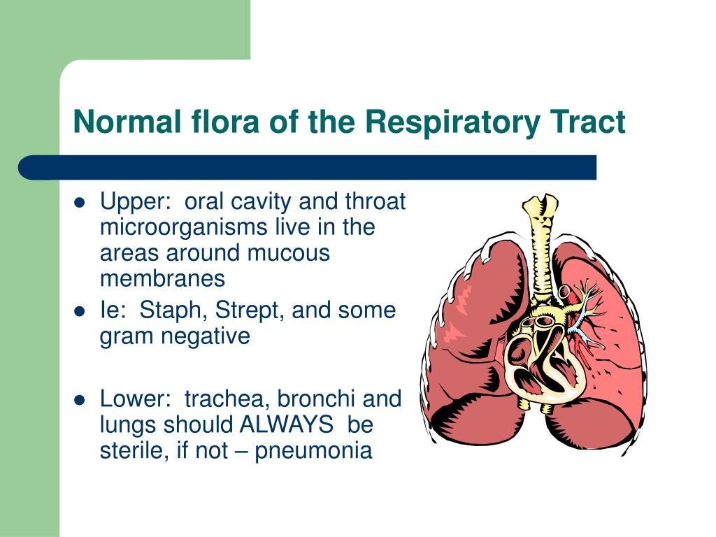 Normal flora of the Respiratory Tract