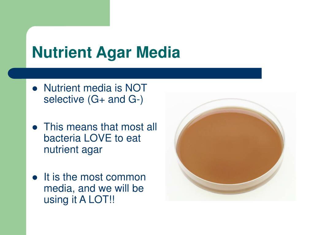 Nutrient Agar Media