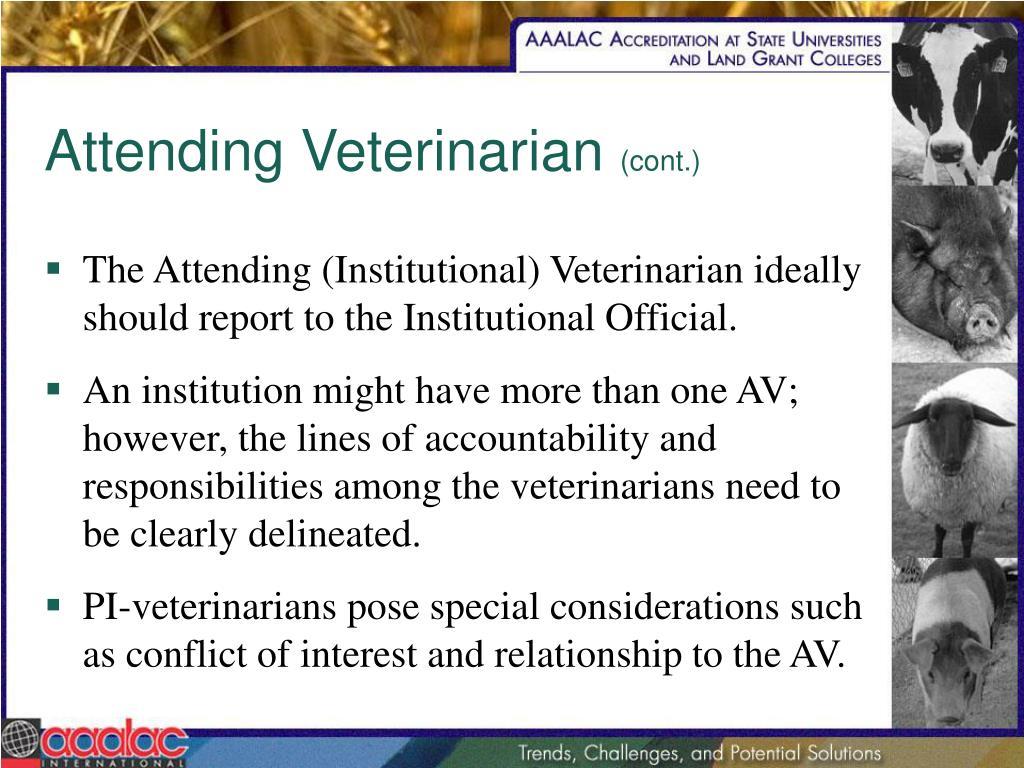 Attending Veterinarian