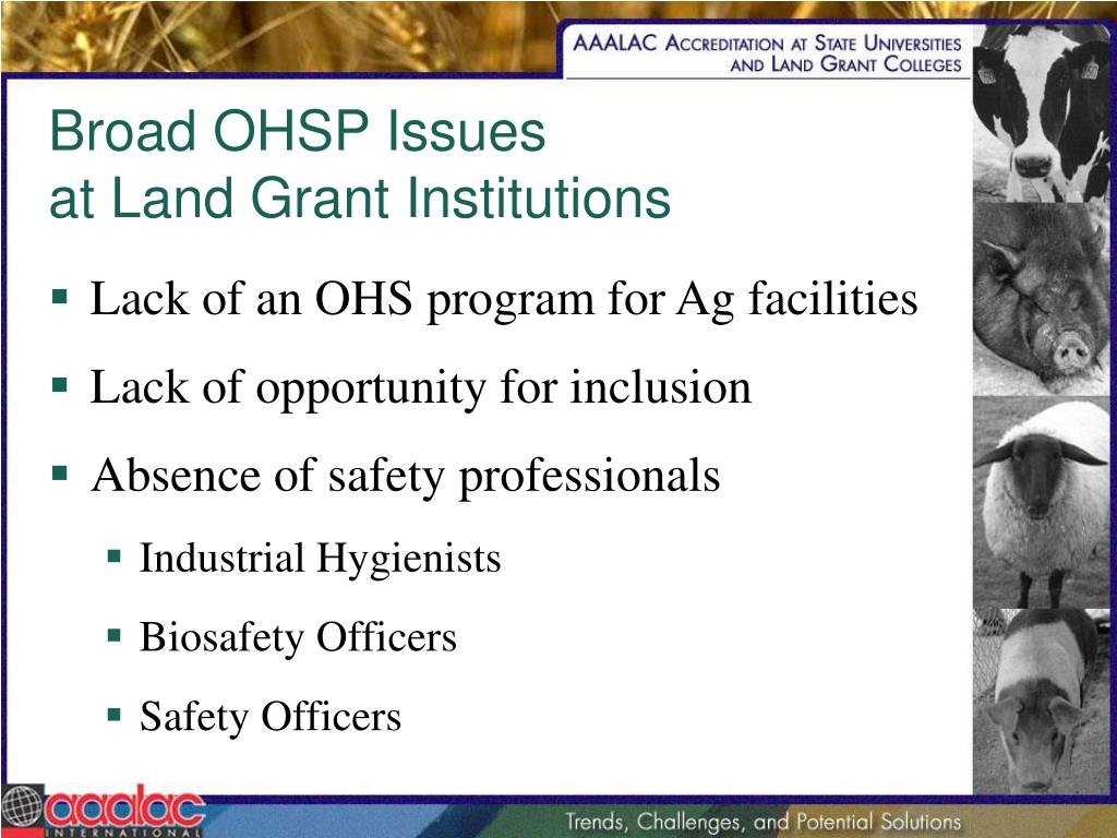 Broad OHSP Issues