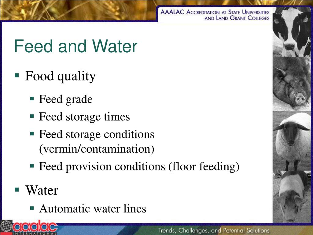Feed and Water