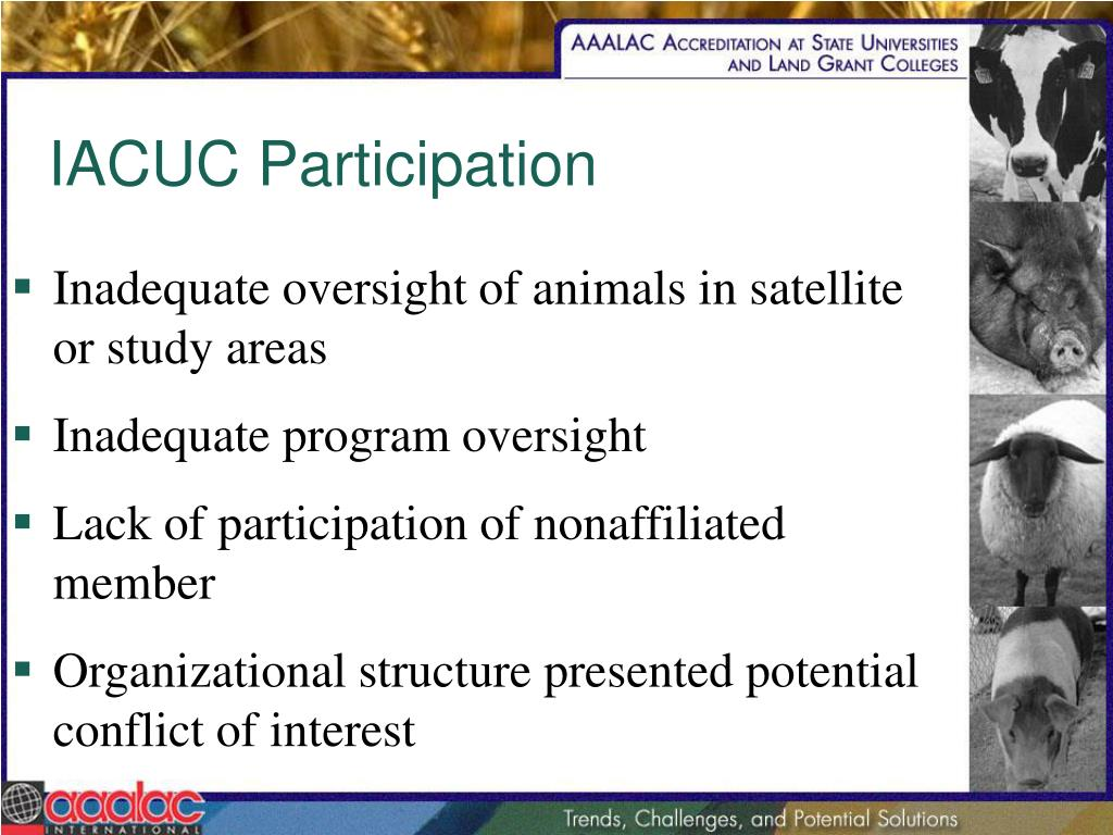 IACUC Participation