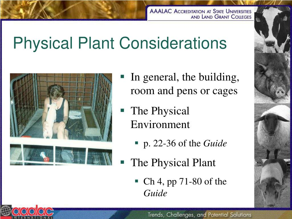 Physical Plant Considerations