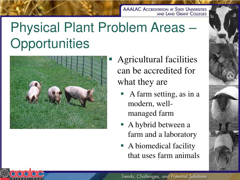 Physical Plant Problem Areas – Opportunities
