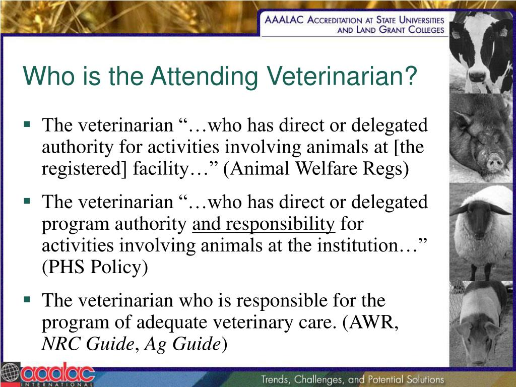 Who is the Attending Veterinarian?