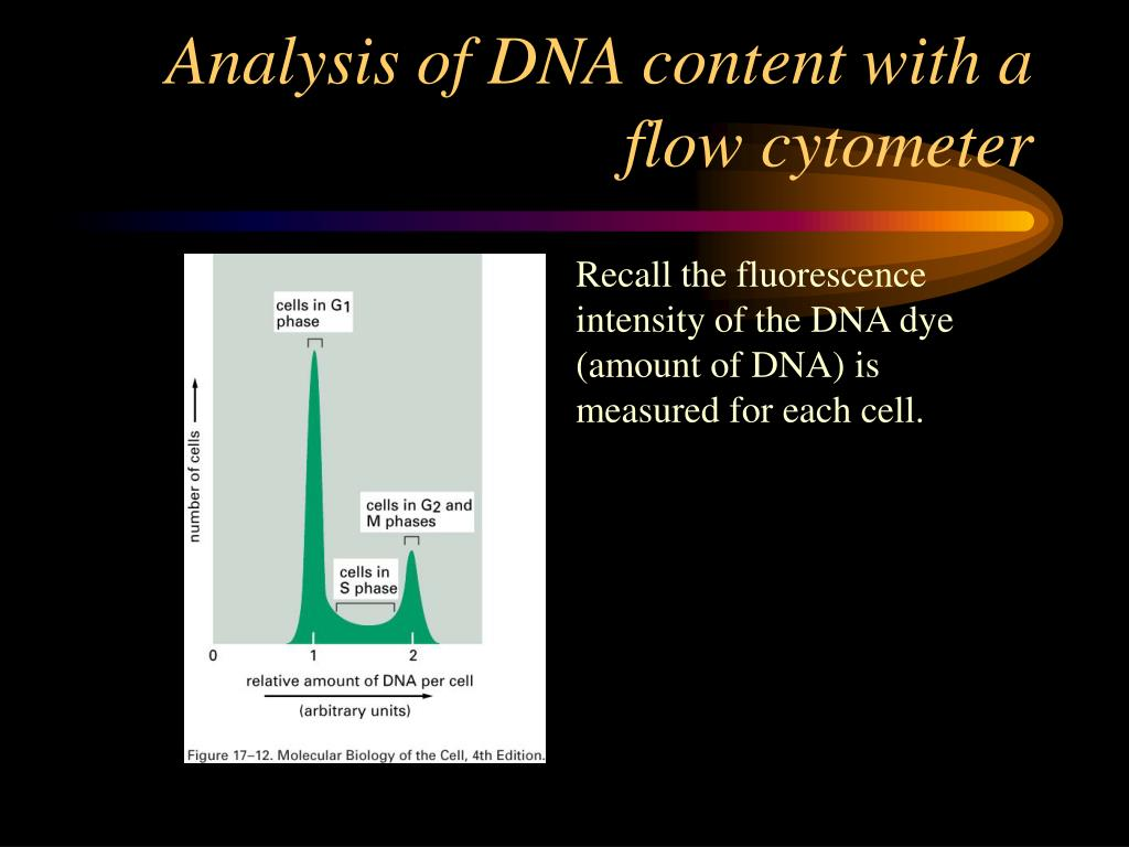 Analysis of DNA content with a flow cytometer