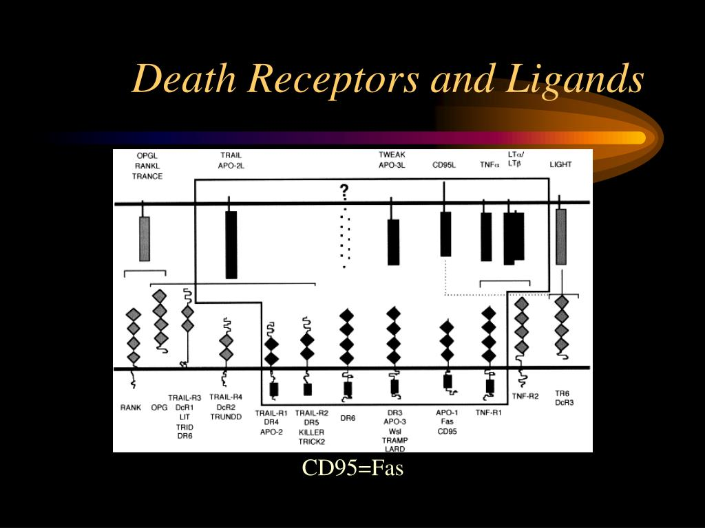 Death Receptors and Ligands