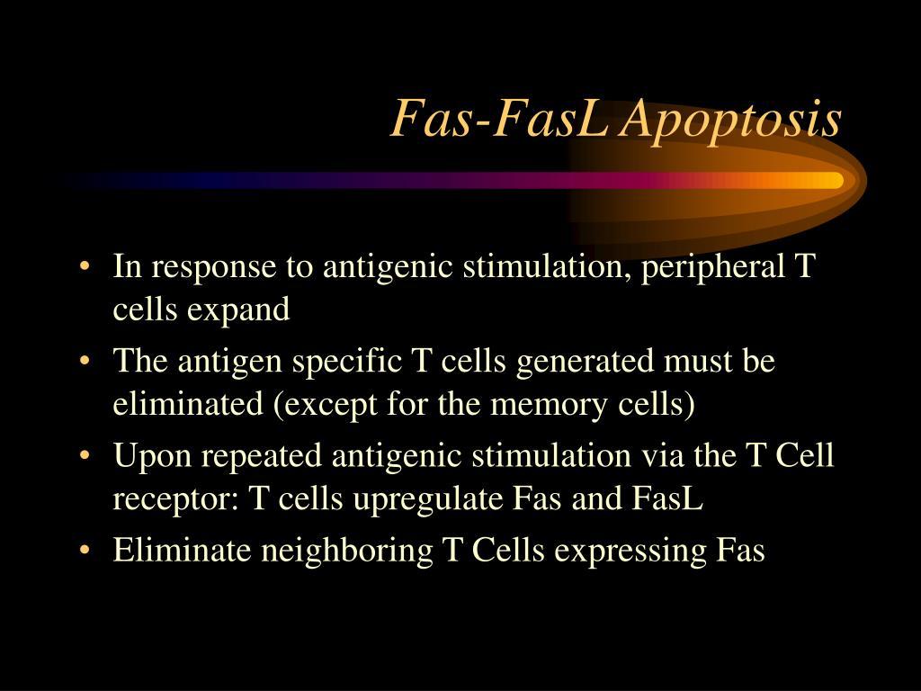 Fas-FasL Apoptosis