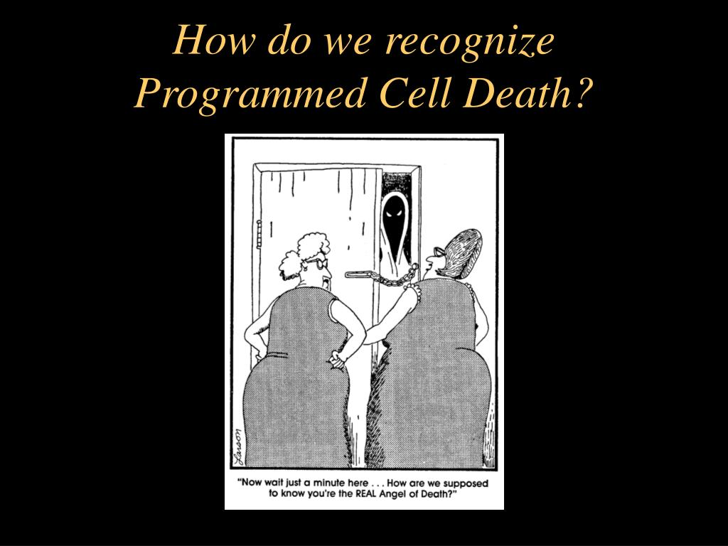 How do we recognize Programmed Cell Death?