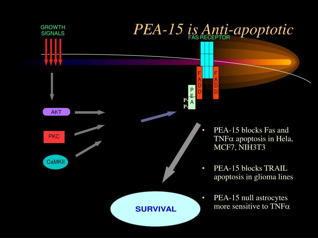 PEA-15 is Anti-apoptotic