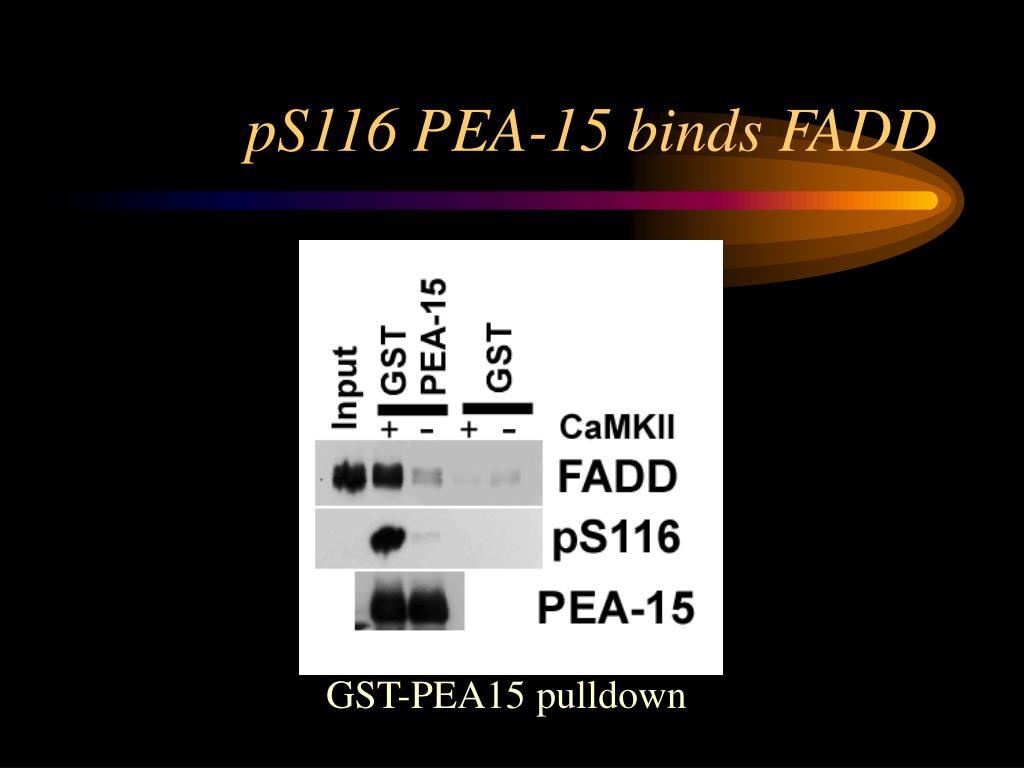 pS116 PEA-15 binds FADD