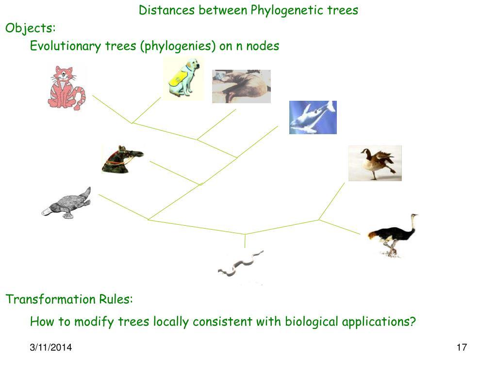 Distances between Phylogenetic trees