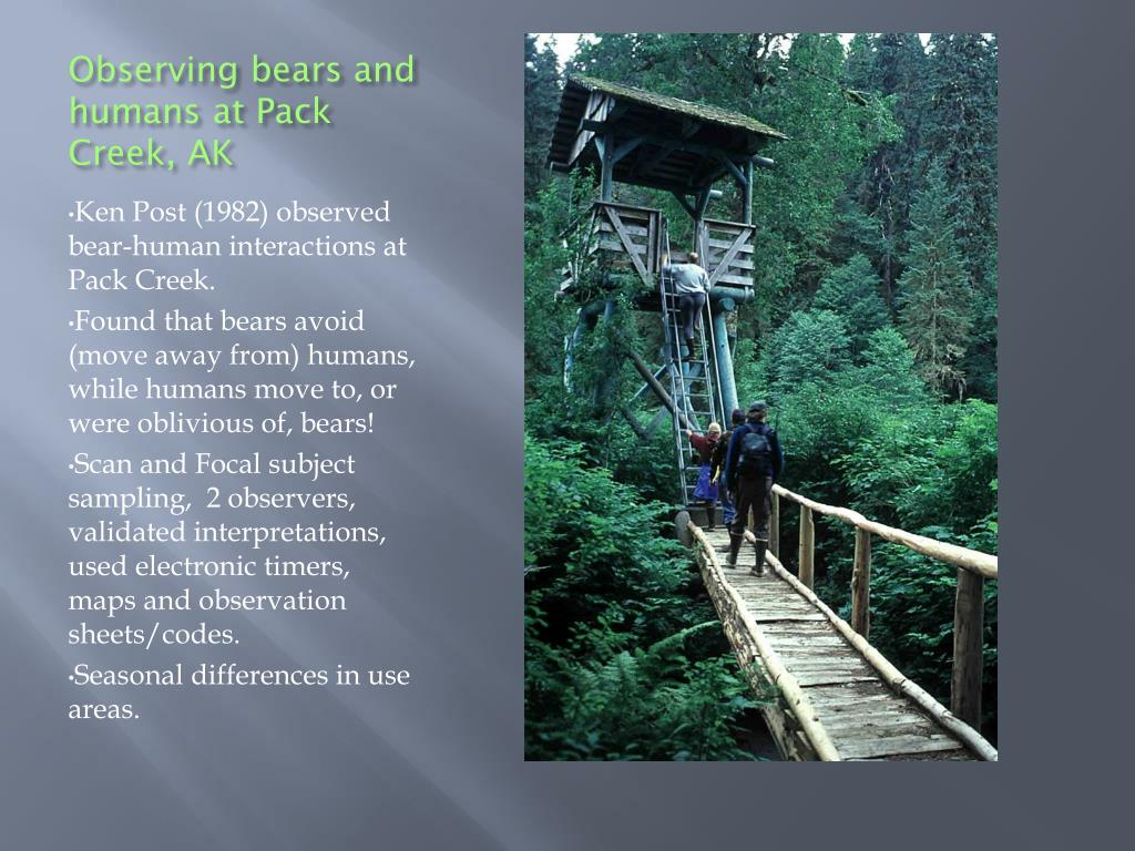 Observing bears and humans at Pack Creek, AK