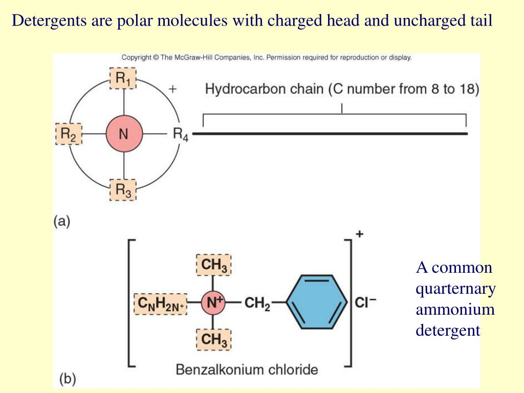 Detergents are polar molecules with charged head and uncharged tail