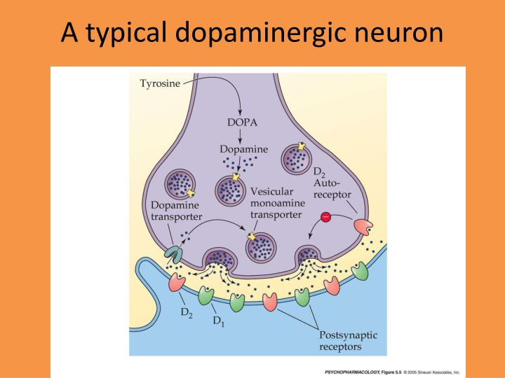 the discovery and identification of neurotransmitters Cns neurotransmitters 2010 contents 1 central nervous system  while a detailed discussion of the various central neurotransmitters and the criteria for their identification is beyond the scope of this text, a summary of the most important mammalian central neurotransmitters follows  acetylcholine the discovery that ach was a.