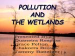 pollution and the wetlands