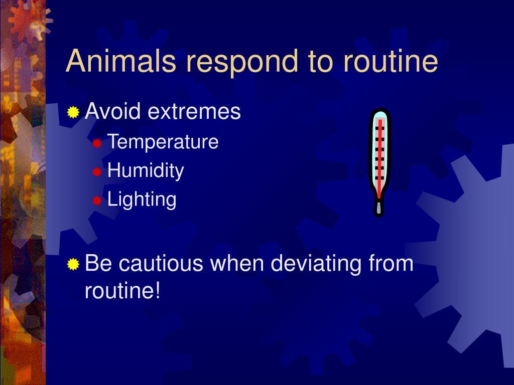 Animals respond to routine