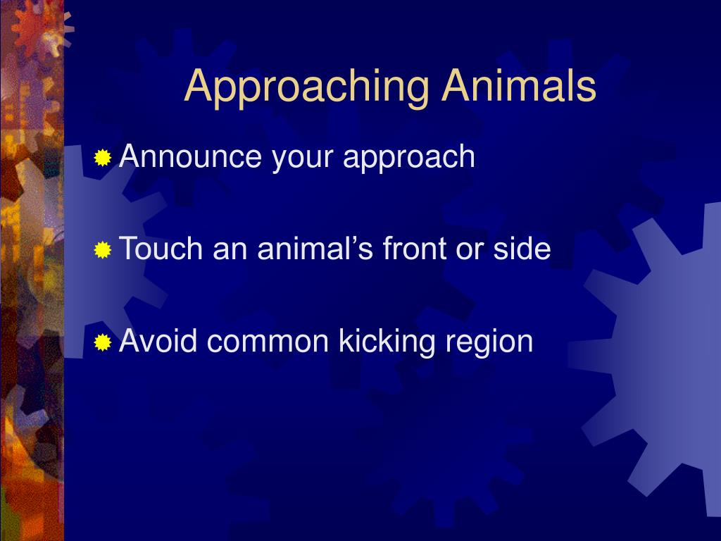 Approaching Animals