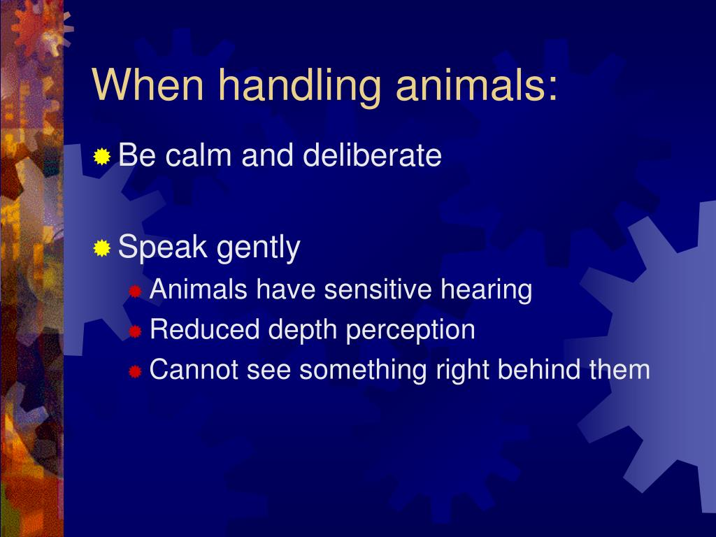 When handling animals: