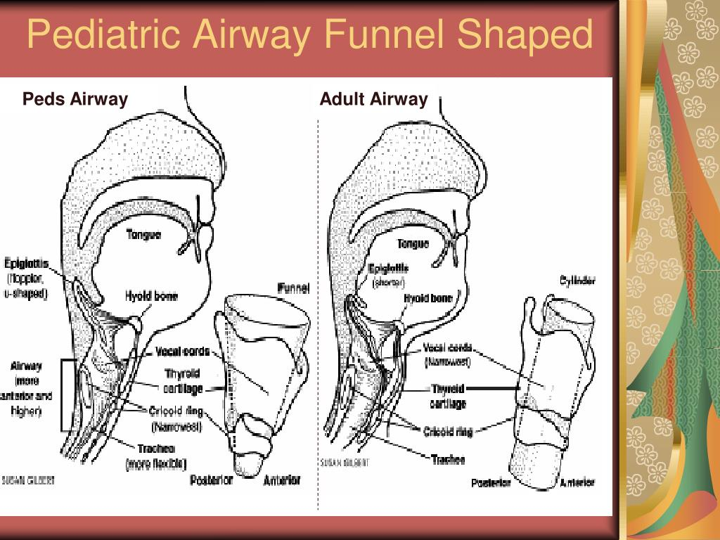 Pediatric Airway Funnel Shaped