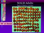 malb adults eggs to adult ca 30 days