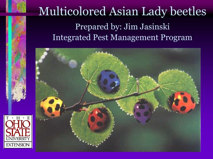 multicolored asian lady beetles prepared by jim jasinski integrated pest management program n.