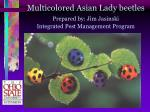 multicolored asian lady beetles prepared by jim jasinski integrated pest management program