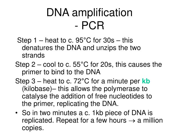 Ppt reading the blueprint of life powerpoint presentation id dna amplification pcr malvernweather Images