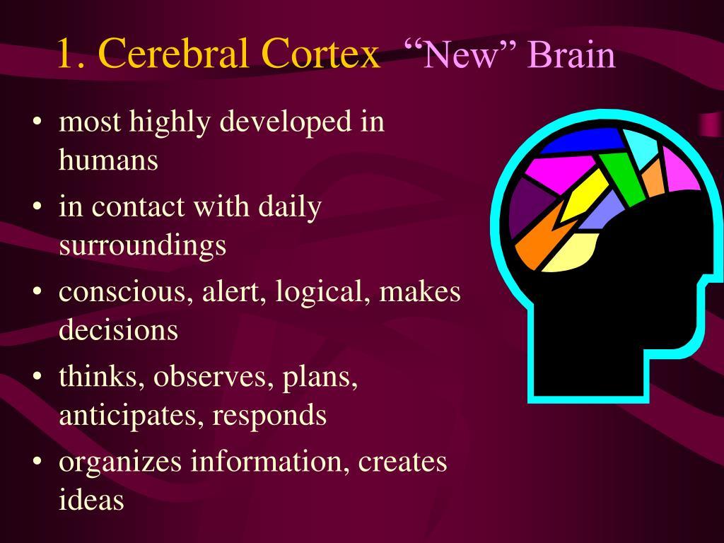 1. Cerebral Cortex