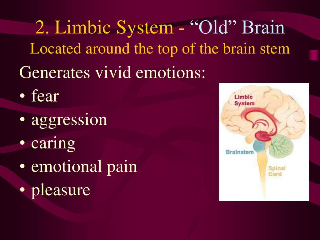 2. Limbic System -