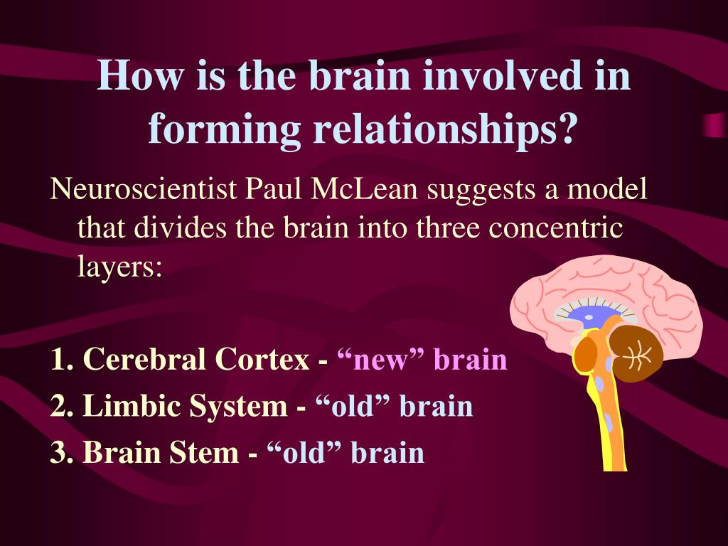 How is the brain involved in forming relationships?