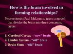 how is the brain involved in forming relationships