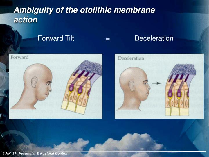 Ambiguity of the otolithic membrane action
