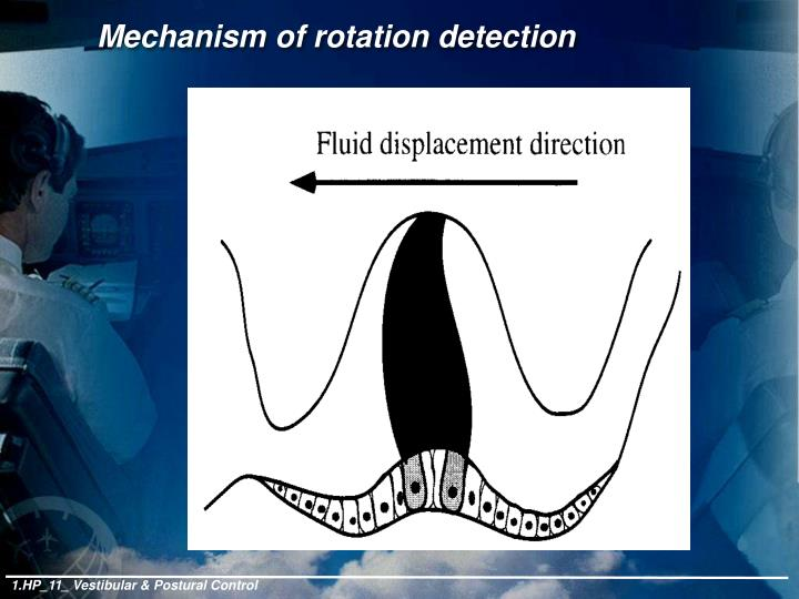 Mechanism of rotation detection